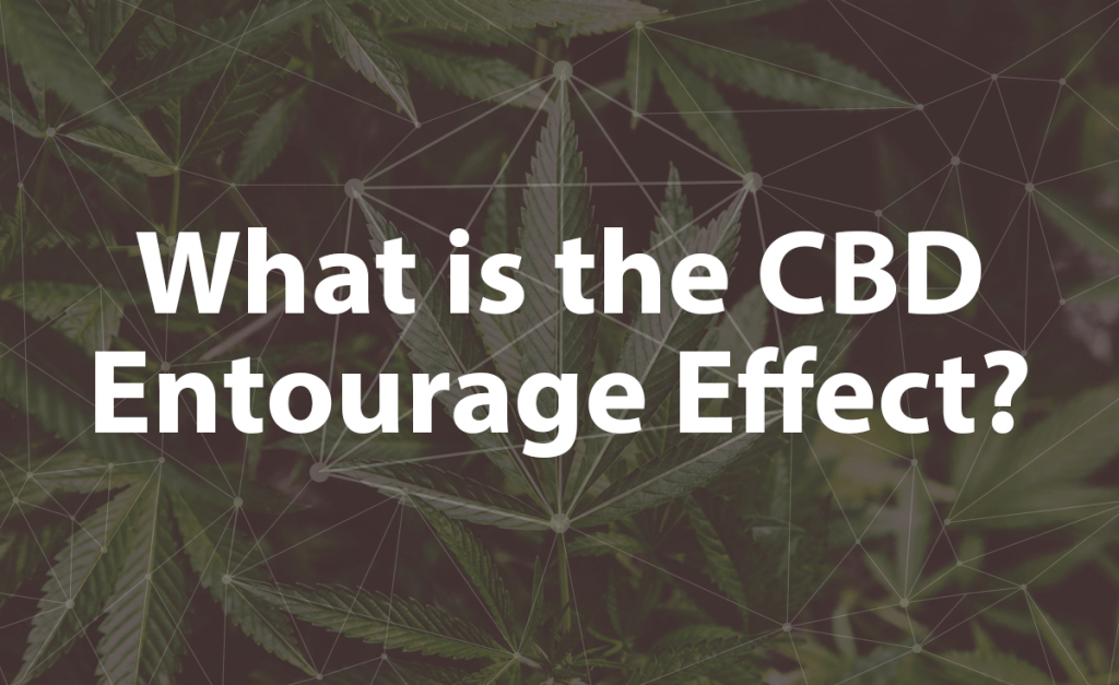 What is the CBD Entourage Effect?