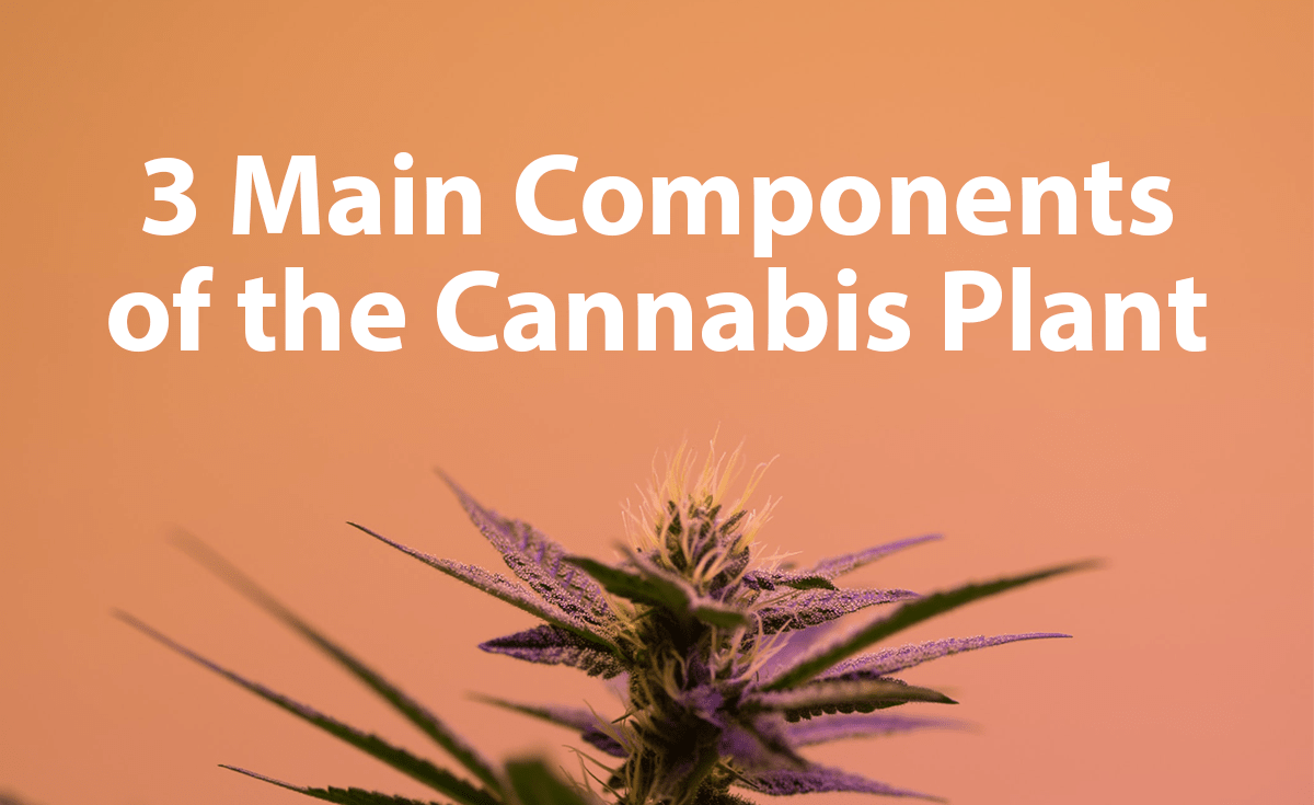 3 Main Components Of the Cannabis Plant